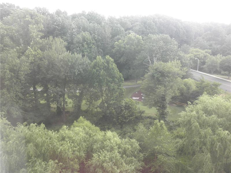 View from condo, golf course, trees and stream