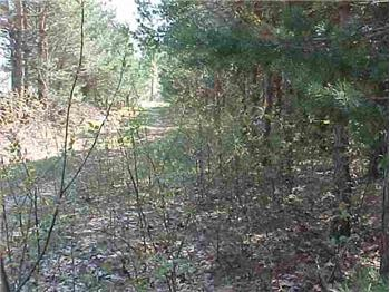 7.5 Acres Riley Rd, Interlochen, MI